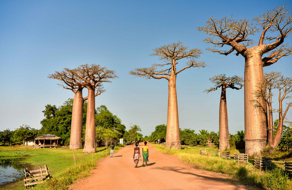 Destinazioni_Africa_Madagascar_baobab_davide guglielmi_contemporary art of travel